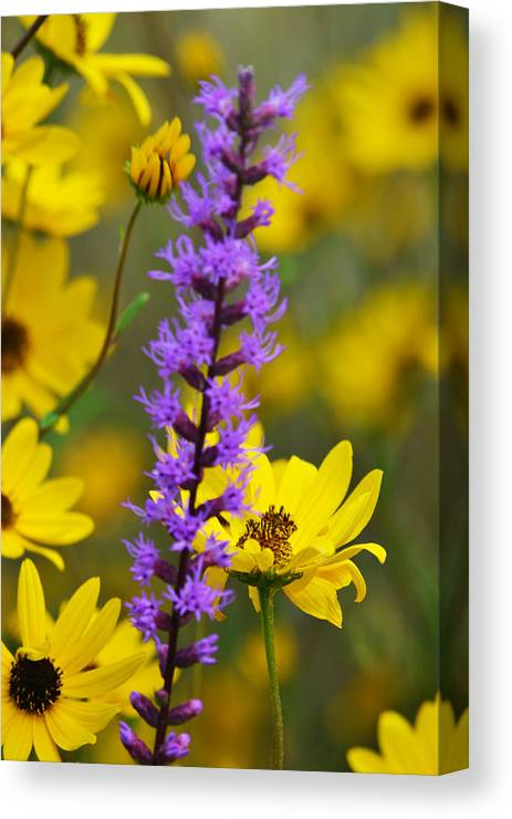 Flower Canvas Print featuring the photograph Wild Breeze by Melanie Moraga