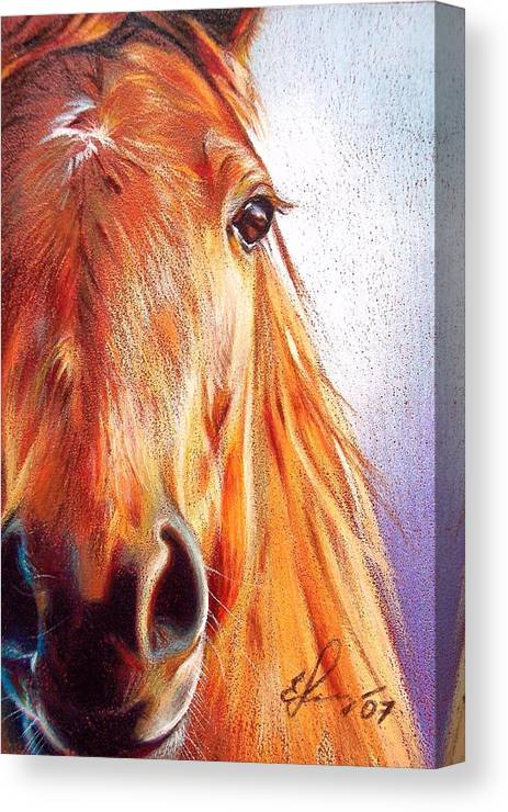Horse Animal Art Equine Drawing Portrait Canvas Print featuring the drawing Chestnut by Elena Kolotusha