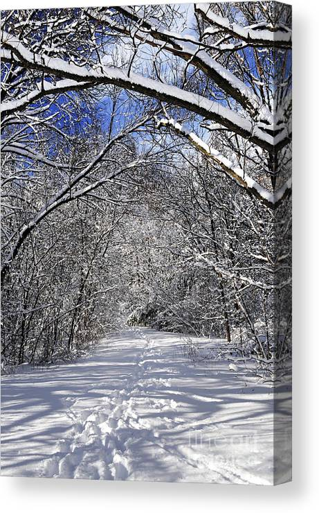 Winter Canvas Print featuring the photograph Path In Winter Forest by Elena Elisseeva