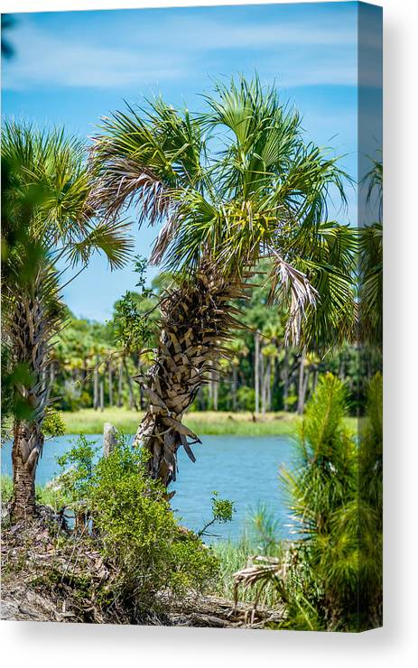 Beaufort Canvas Print featuring the photograph Palmetto Forest On Hunting Island Beach by Alex Grichenko