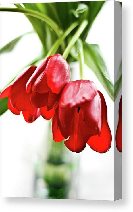 Red Canvas Print featuring the photograph 3 Tulips by Kathryn Goddard
