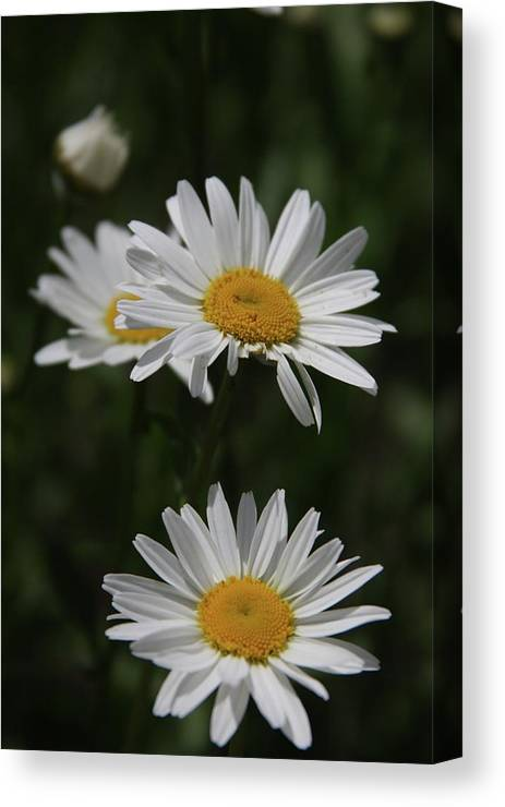 Flowers Canvas Print featuring the photograph Flowers by Luke Robertson
