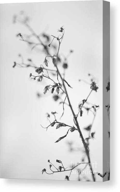 Dry Canvas Print featuring the photograph Untitled by Gabriela Insuratelu