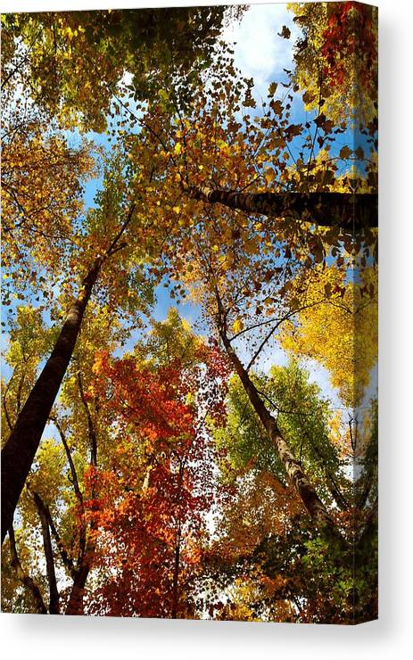 Colorful Canvas Print featuring the photograph A Canopy Of Color by Patricia Twardzik