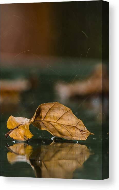 Autumn Canvas Print featuring the photograph Autumn Rain by Shay Weiss