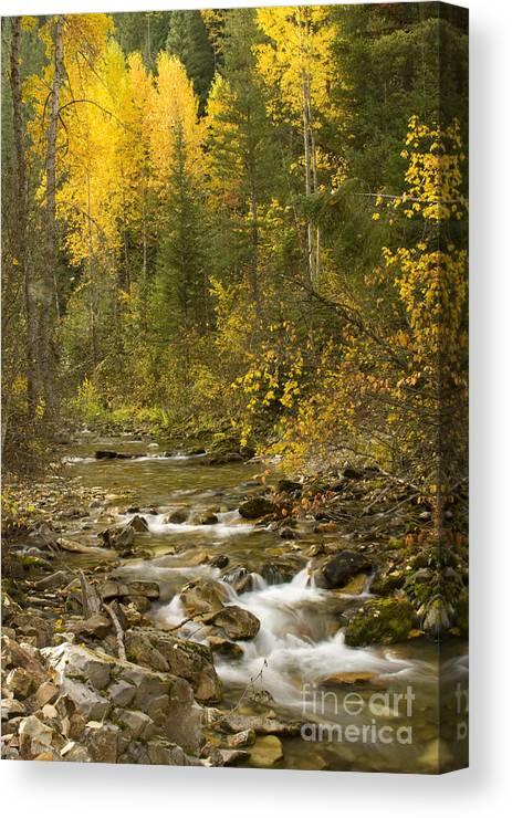 Idaho Canvas Print featuring the photograph Autumn Stream by Idaho Scenic Images Linda Lantzy