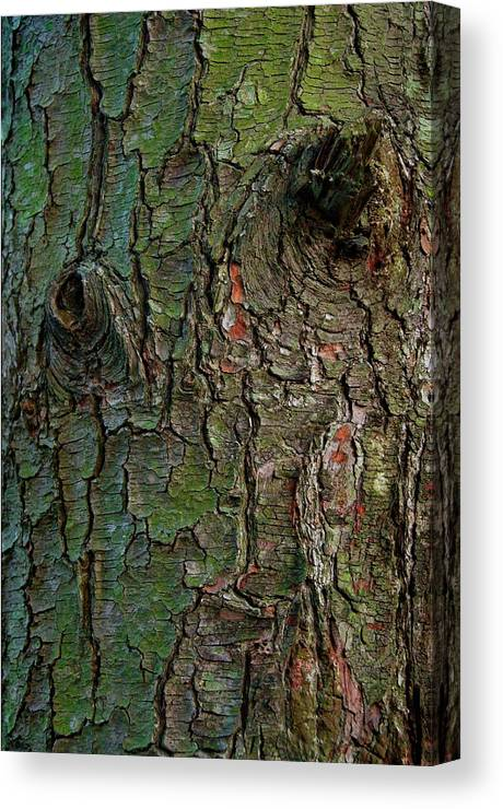 Tree Canvas Print featuring the photograph Bark by Murray Bloom