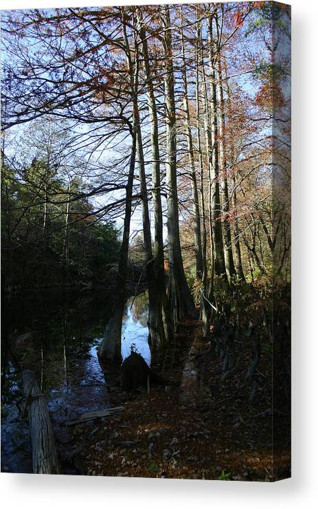 River Canvas Print featuring the photograph Between Trees by Nina Fosdick