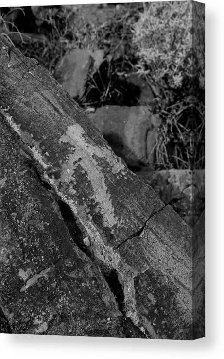 Arizona Desert Photography Canvas Print featuring the photograph Bird by John Gee
