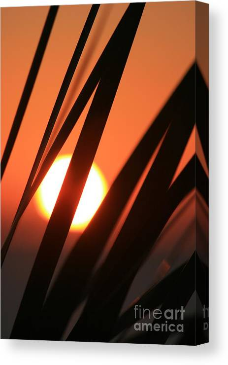 Sun Canvas Print featuring the photograph Blazing Sunset And Grasses by Nadine Rippelmeyer