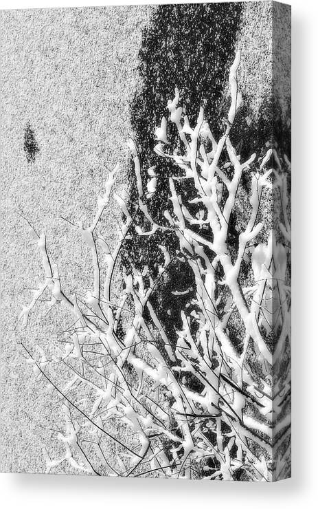 Black Canvas Print featuring the photograph Branch In Lake Ice With Snow Black And White by Randy Steele