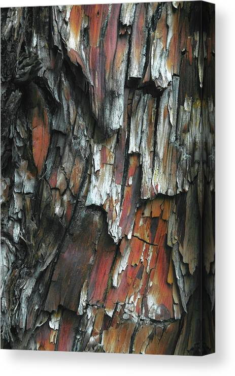 Abstract Canvas Print featuring the photograph Burnt Tree Abstract by Joseph Smith