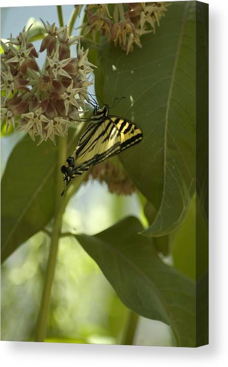 Flower Canvas Print featuring the photograph Butterfly 1 by Sara Stevenson