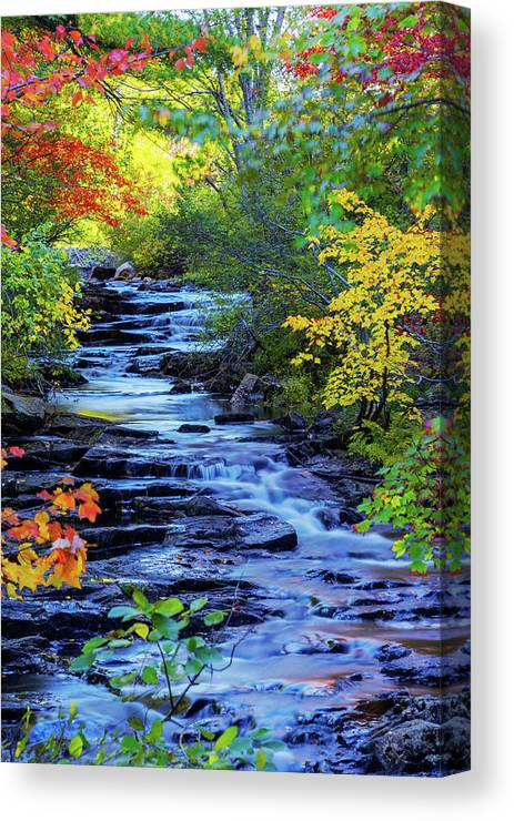 Color Alley Canvas Print featuring the photograph Color Alley by Chad Dutson