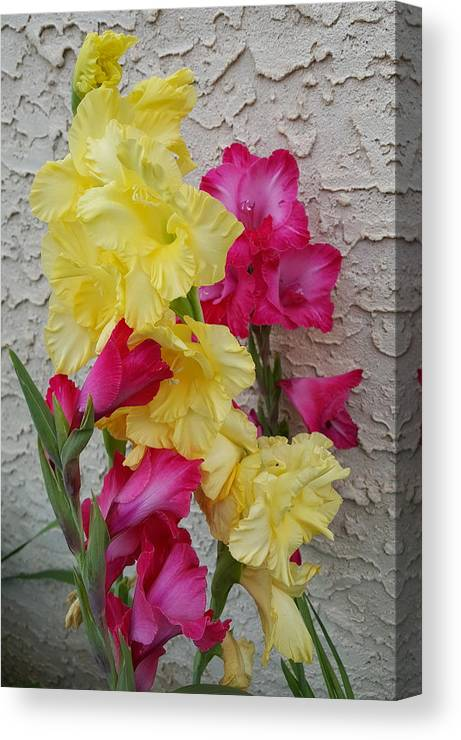Colorful Canvas Print featuring the photograph Colorful Glads by Tammy Finnegan