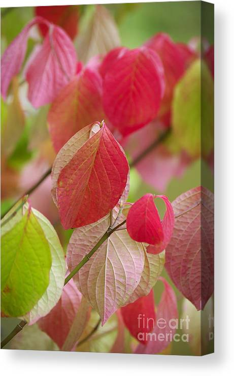Leaf Canvas Print featuring the photograph Colorful Leafs by Angela Doelling AD DESIGN Photo and PhotoArt