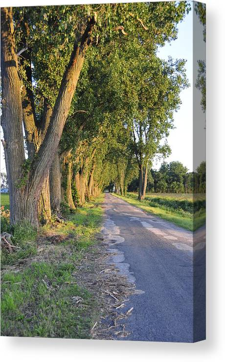 Road Canvas Print featuring the photograph Country Road by David Arment