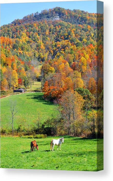 Horses Canvas Print featuring the photograph Curious Grazer by Alan Lenk