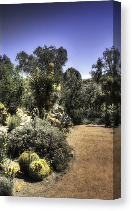 America Canvas Print featuring the photograph Desert Walkway by Lynn Geoffroy
