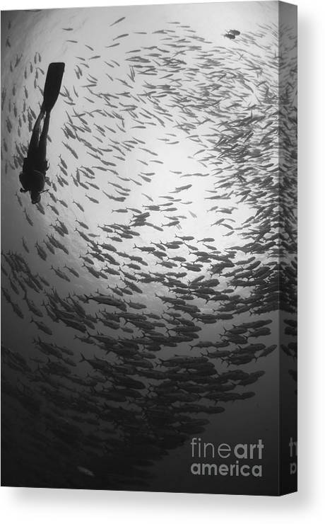 Fish Canvas Print featuring the photograph Diver And A Large School Of Bigeye by Steve Jones