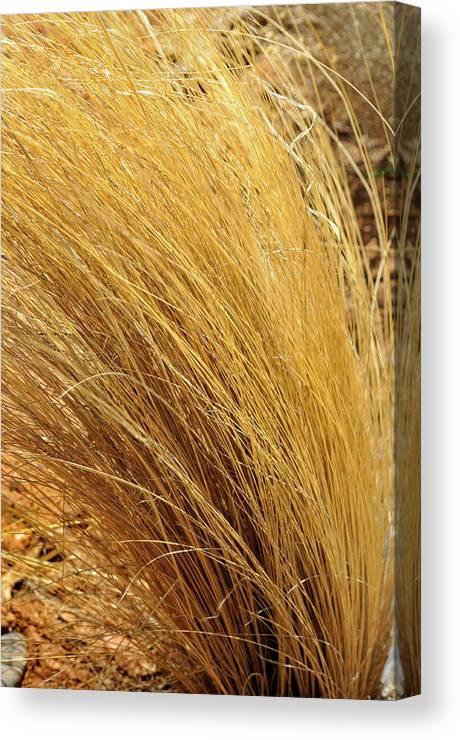 Landscape Canvas Print featuring the photograph Dried Grass by Ron Cline