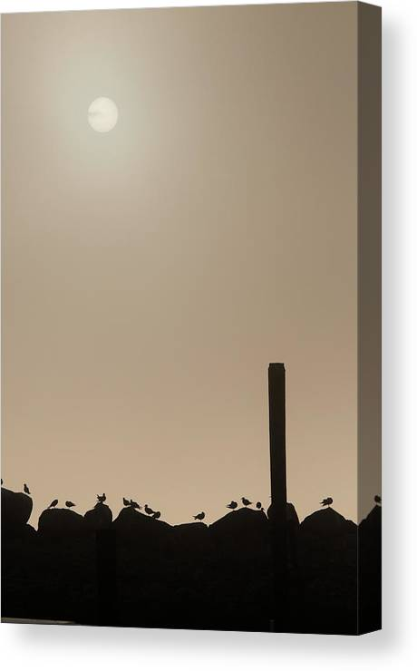 Animals Canvas Print featuring the photograph Early Morning Silhouette  by Chad Davis