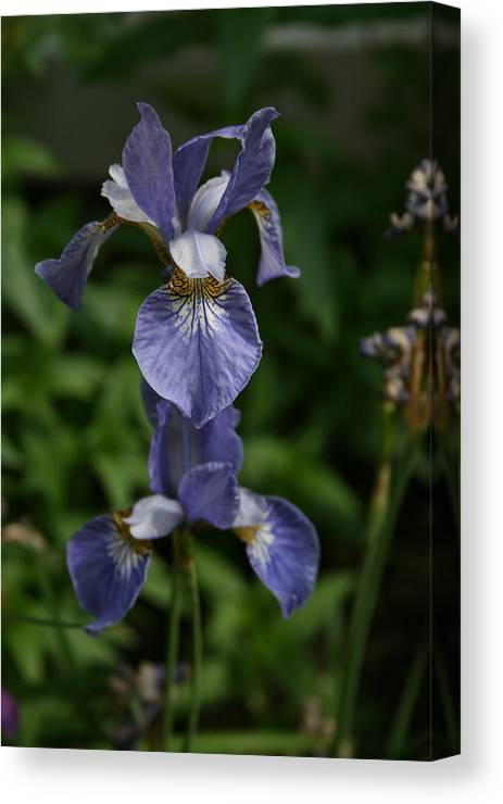 Flowers Canvas Print featuring the photograph Elevated Iris by Alan Rutherford