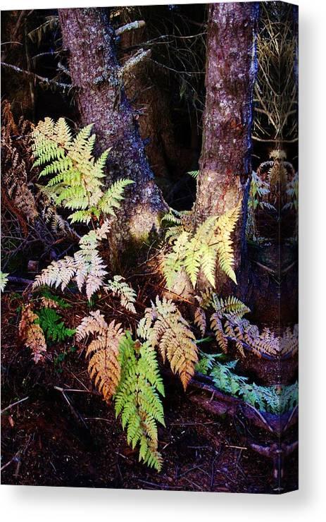 Alaskan Ferns In Autumn Canvas Print featuring the photograph Fall Ferns by Lori Mahaffey