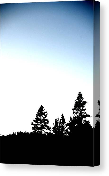 Lake Tahoe Canvas Print featuring the photograph Four Tahoe Pines by Davida Parker