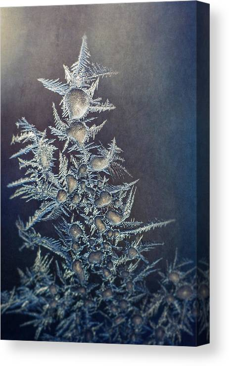 Frozen Canvas Print featuring the photograph Frost by Scott Norris