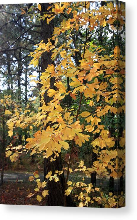 Canvas Print featuring the photograph Golden Leaves by Mary Haber