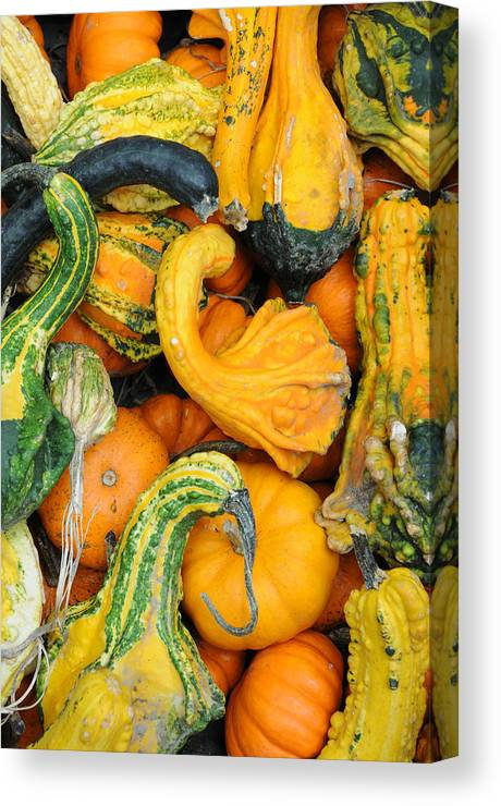 Gourds Canvas Print featuring the photograph Gourds by Terese Loeb Kreuzer