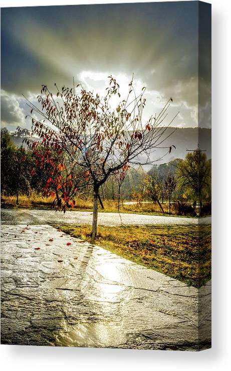 Tree Canvas Print featuring the photograph Heaven's Gate by Monika Garvalova