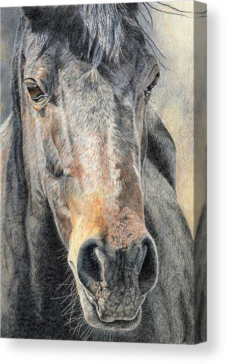 Horse Canvas Print featuring the drawing High Desert by Joanne Stevens