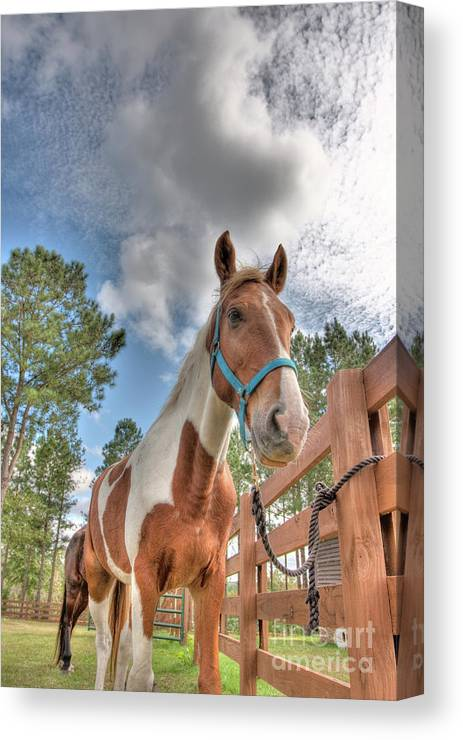 Horses Canvas Print featuring the photograph Horses by Ted Reynolds