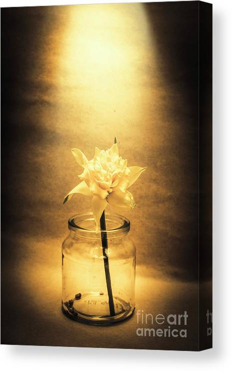 Flower Canvas Print featuring the photograph In Light Of Nostalgia by Jorgo Photography - Wall Art Gallery