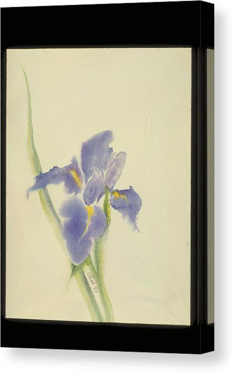 Watercolor Canvas Print featuring the painting Japanese Iris by Nancy Ethiel