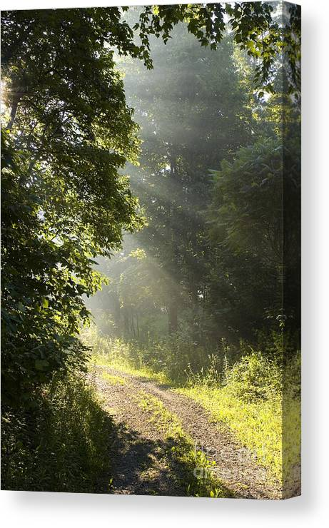 West Virginia Canvas Print featuring the photograph Light Unto My Path by Thomas R Fletcher