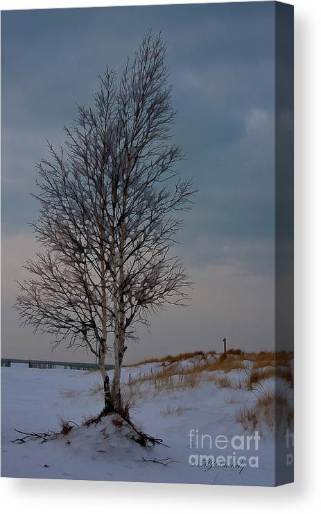 Tree Canvas Print featuring the photograph Lone Tree by Marti Buckely