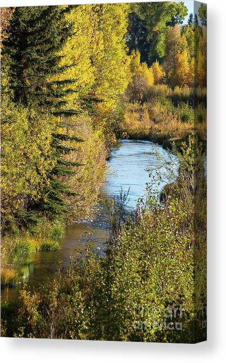 Grand Teton National Park Canvas Print featuring the photograph Meandering Stream by Bob Phillips