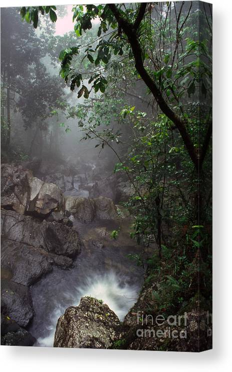 Puerto Rico Canvas Print featuring the photograph Misty Rainforest El Yunque Mirror Image by Thomas R Fletcher