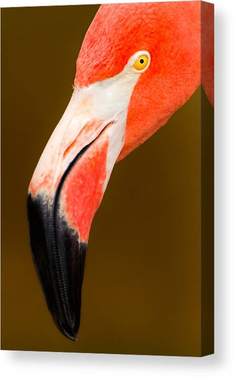 Flamingo Canvas Print featuring the photograph Natural Beauty by Marvin Rivera