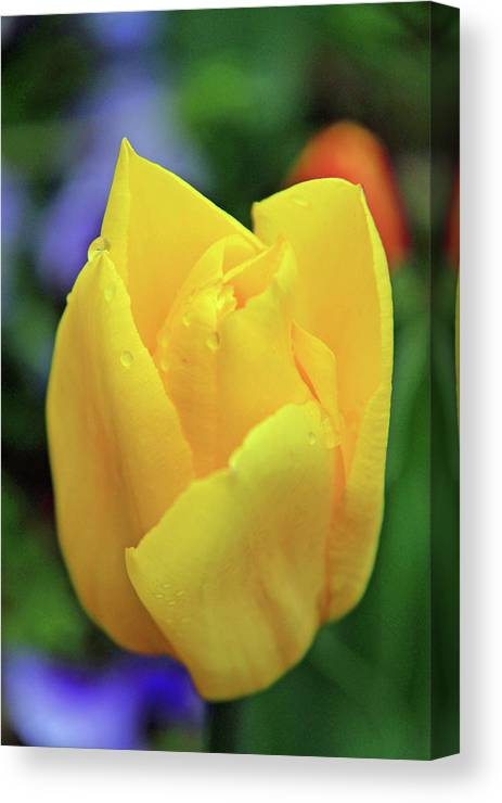 Flowers Canvas Print featuring the photograph Open by Scott Mahon