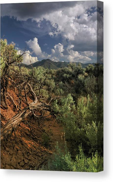 Landscape Canvas Print featuring the photograph Out On The Mesa 2 by Ron Cline