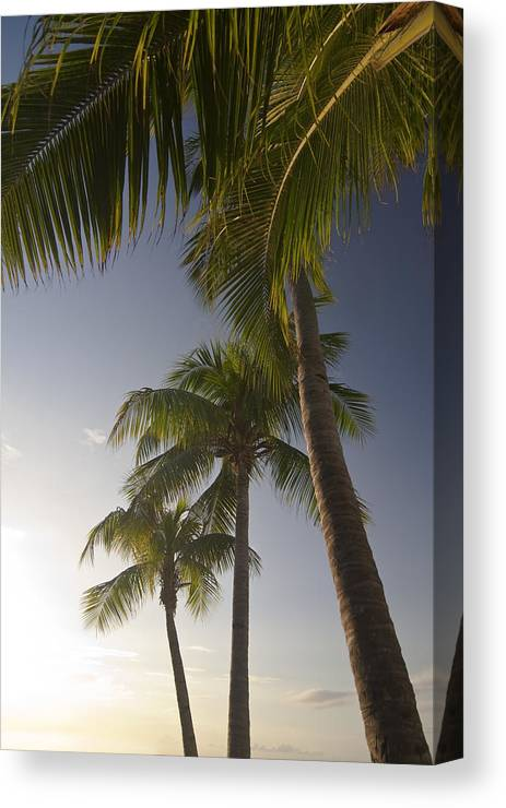 Palm Trees Canvas Print featuring the photograph Palm Trees At Sunset by Sven Brogren