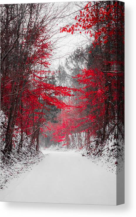 Red Blossoms Canvas Print featuring the photograph Red Blossoms by Parker Cunningham