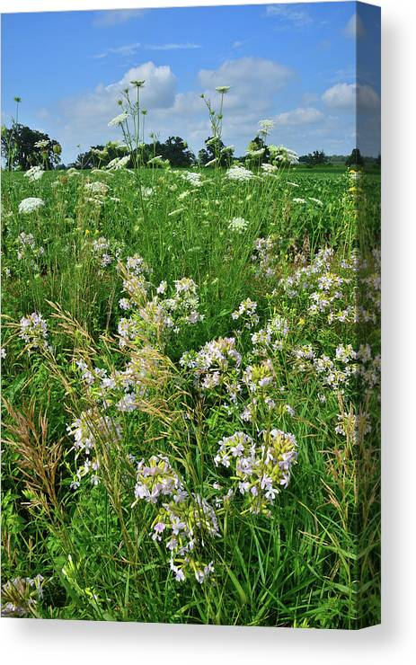 Mchenry County Canvas Print featuring the photograph Roadside Bouquet Of Wildflowers In Mchenry County by Ray Mathis
