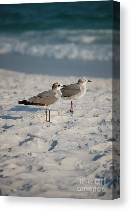 Seagulls Canvas Print featuring the photograph Seagulls by Robert Meanor
