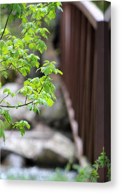 Boxelder Leaves Canvas Print featuring the photograph Signs Of Spring In American Fork Canyon Utah by Colleen Cornelius
