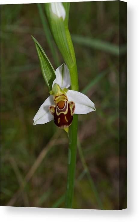 Wildflower Canvas Print featuring the photograph Smiling Orchid by Veron Miller